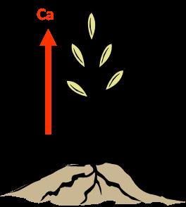 Gráfica 2. Movimiento de Calcio y Auxinas en la planta.