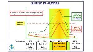 Síntesis de auxinas