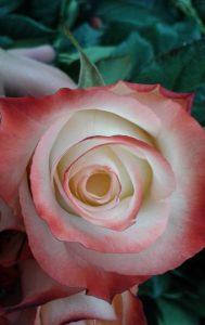 """Flor con centro en forma de """"huevo"""""""