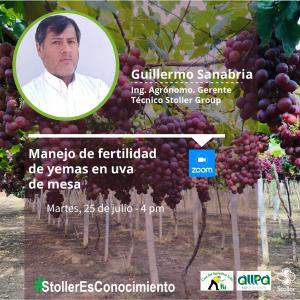 Uva - Guillermo Sanabria-01