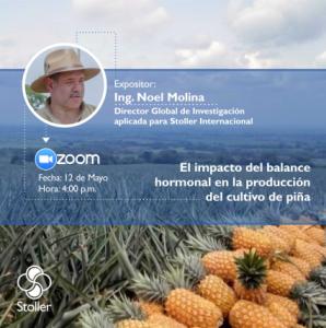 Zoom Piña